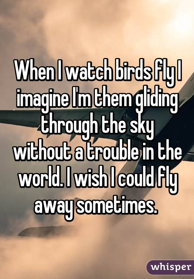 When I watch birds fly I imagine I'm them gliding through the sky without a trouble in the world. I wish I could fly away sometimes.