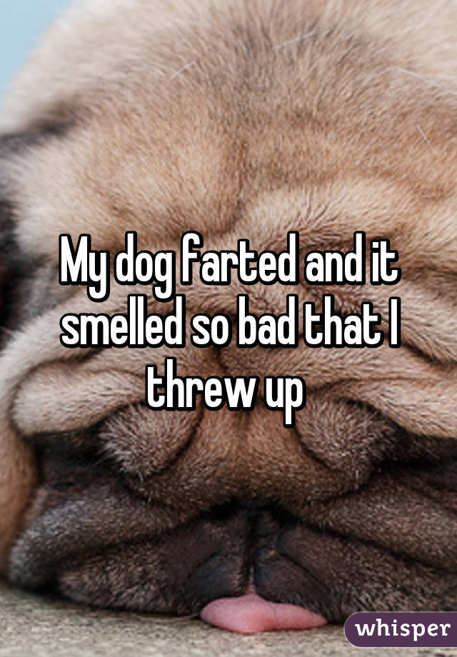 My dog farted and it smelled so bad that I threw up