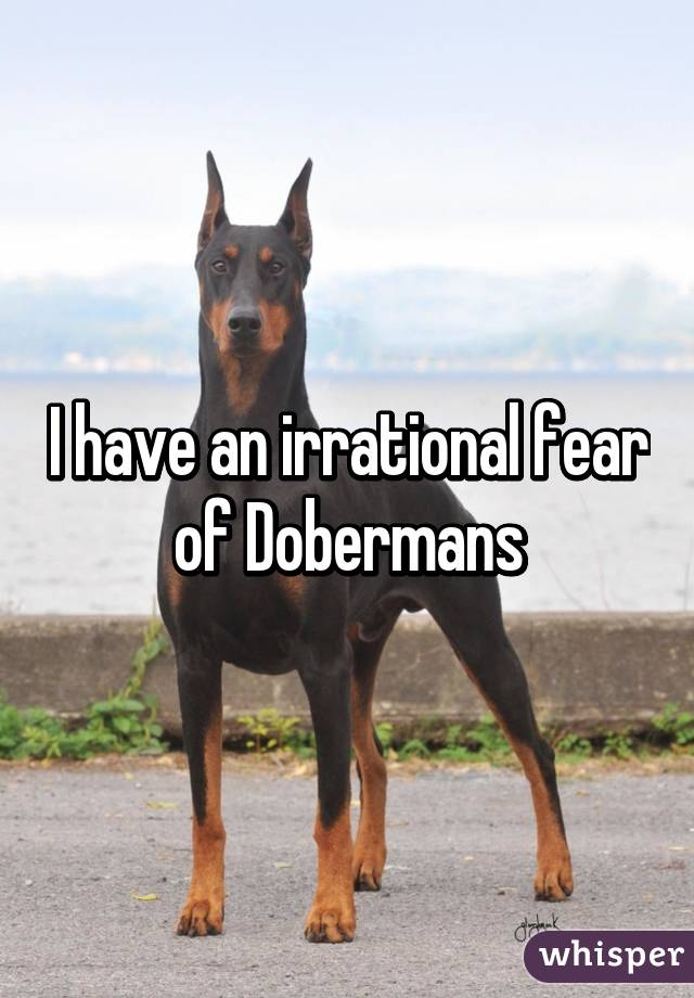 I have an irrational fear of Dobermans