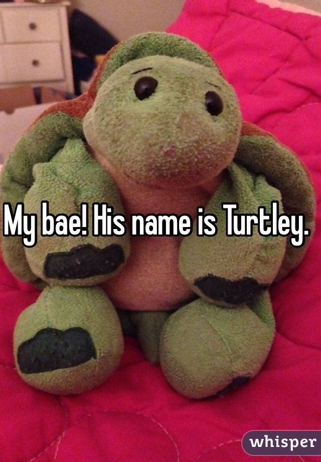My bae! His name is Turtley.