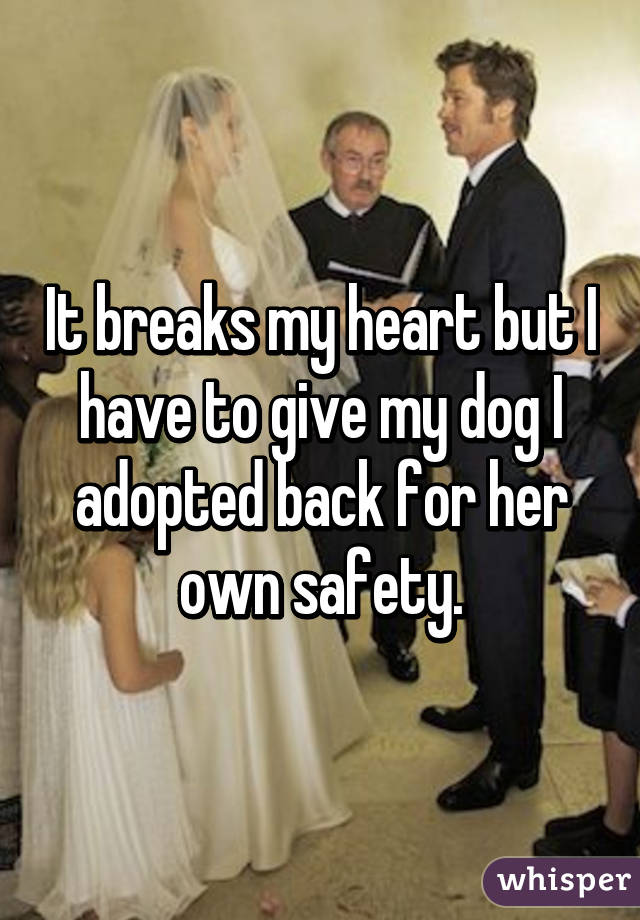 It breaks my heart but I have to give my dog I adopted back for her own safety.