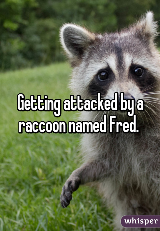 Getting attacked by a raccoon named Fred.