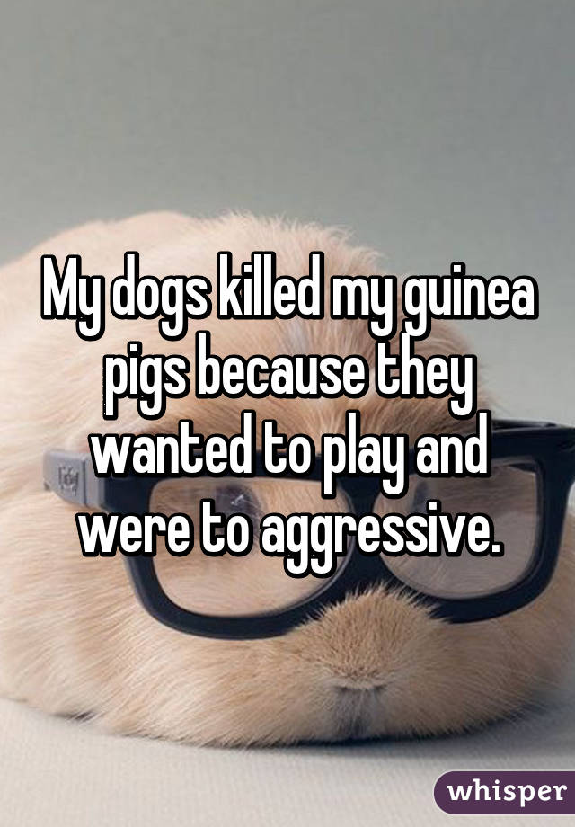 My dogs killed my guinea pigs because they wanted to play and were to aggressive.