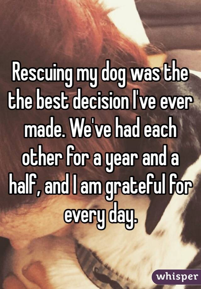 Rescuing my dog was the the best decision I've ever made. We've had each other for a year and a half, and I am grateful for every day.