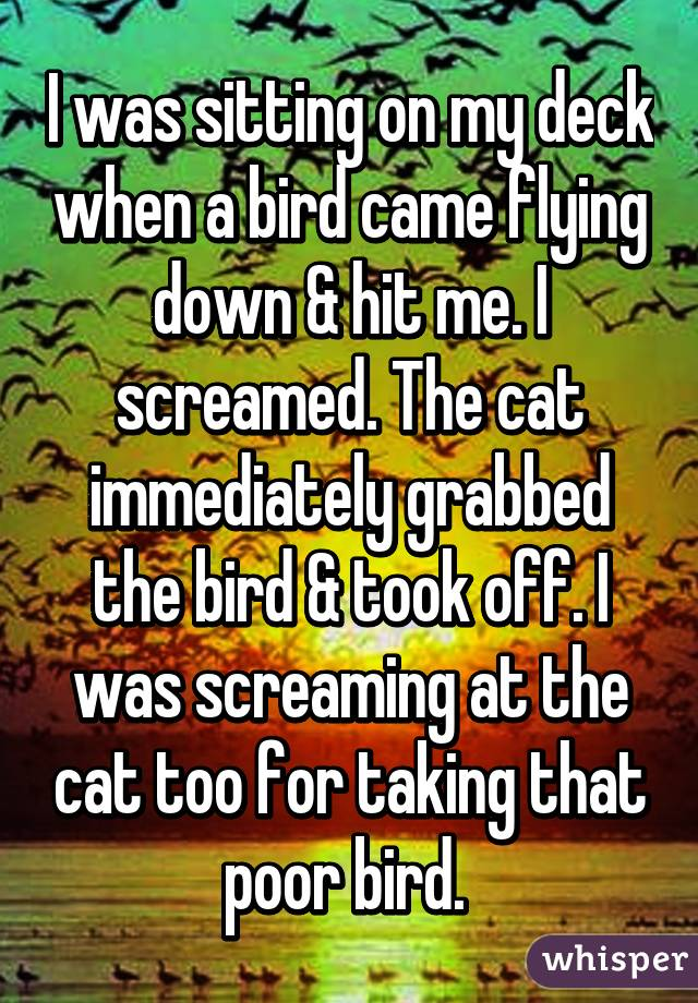 I was sitting on my deck when a bird came flying down & hit me. I screamed. The cat immediately grabbed the bird & took off. I was screaming at the cat too for taking that poor bird.