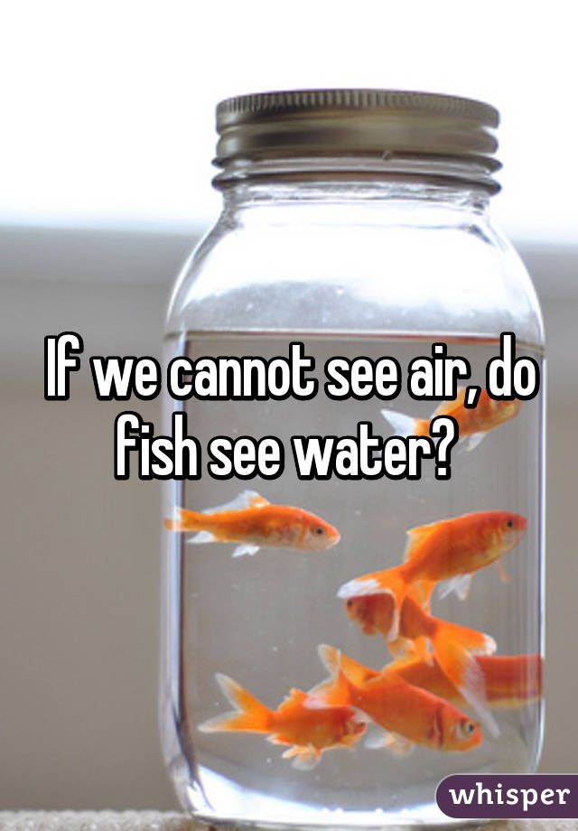 If we cannot see air do fish see water for Can fish see water