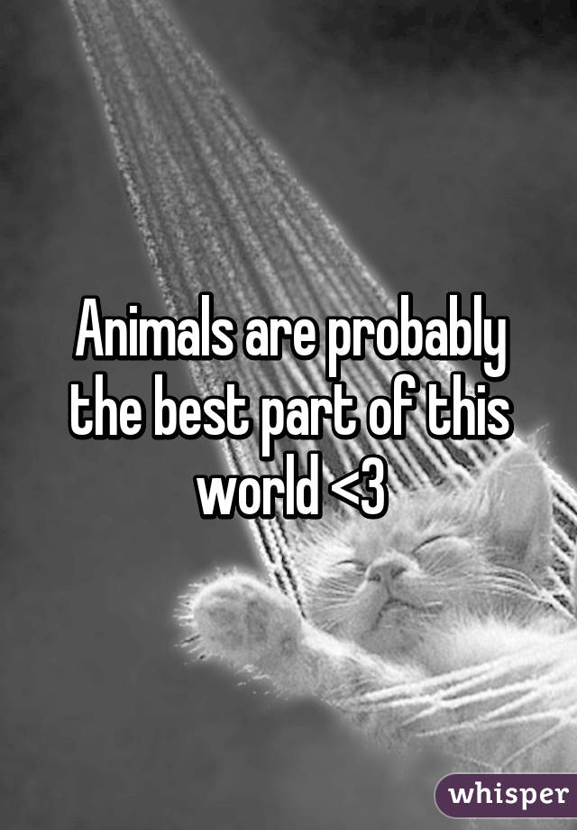 Animals are probably the best part of this world <3