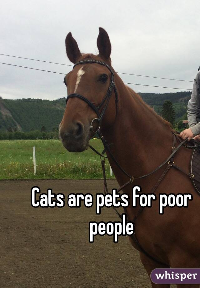 Pets Cat Cats Are Pets For Poor People