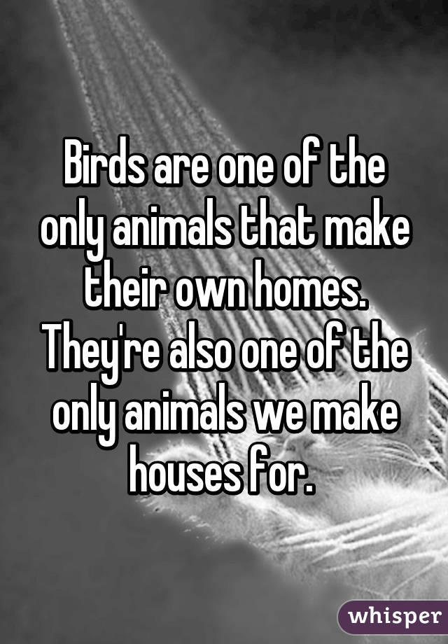 Birds Are One of The Only
