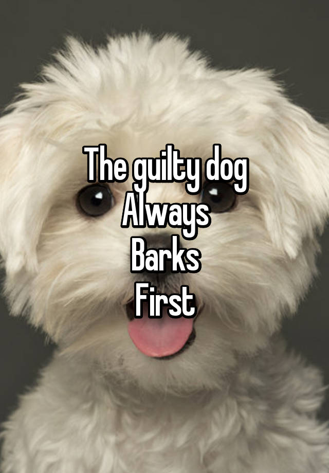 Always Guilty Helpfulharrie Source Coyotemange See: The Guilty Dog Always Barks First