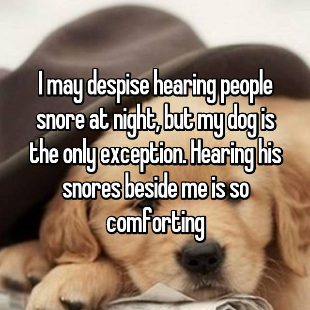 I may despise hearing people snore at night, but my dog is the only exception. Hearing his snores beside me is so comforting