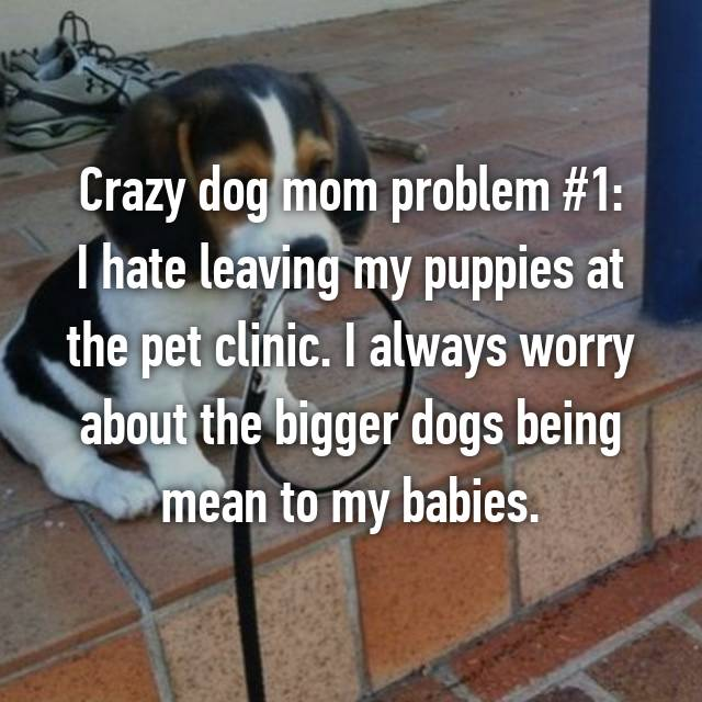 Crazy dog mom problem #1: I hate leaving my puppies at the pet clinic. I always worry about the bigger dogs being mean to my babies.