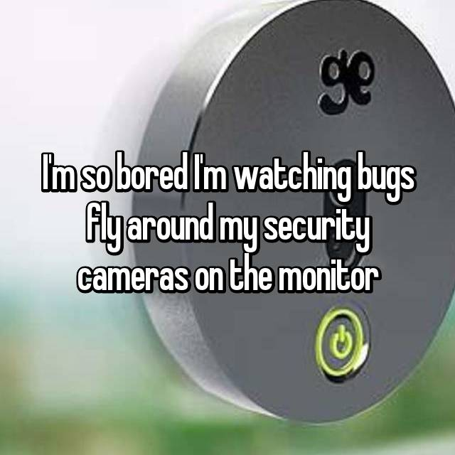 I'm so bored I'm watching bugs fly around my security cameras on the monitor