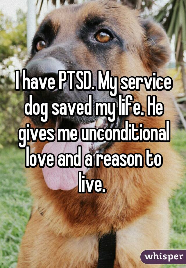I have PTSD. My service dog saved my life. He gives me unconditional love and a reason to live.