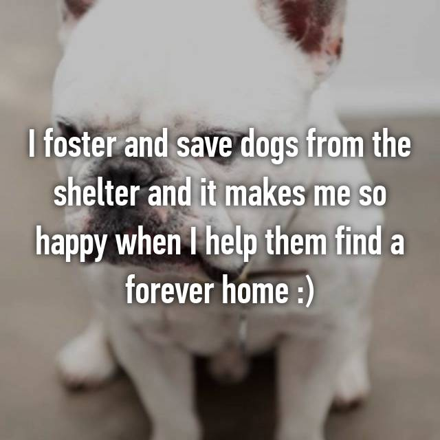 I foster and save dogs from the shelter and it makes me so happy when I help them find a forever home :)
