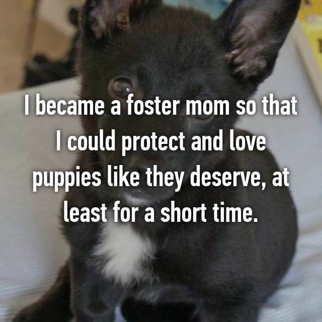 I became a foster mom so that I could protect and love puppies like they deserve, at least for a short time.