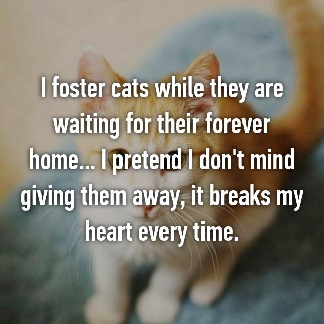 I foster cats while they are waiting for their forever home... I pretend I don't mind giving them away, it breaks my heart every time.