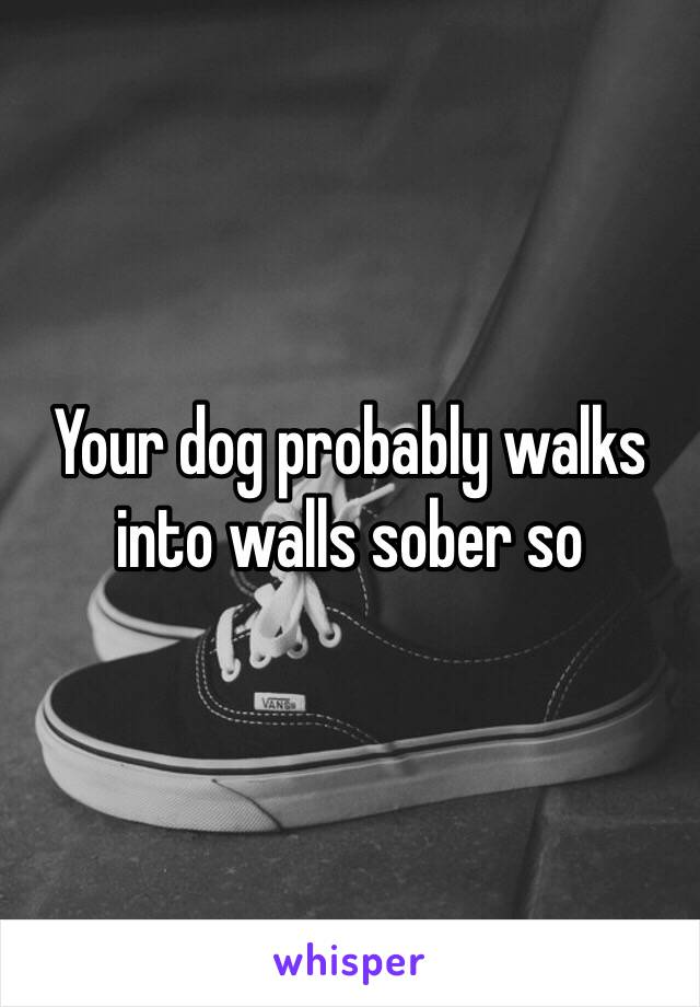 My dog doesn t judge me for getting drunk and walking into a wall Good dog. Awallgoo xyz