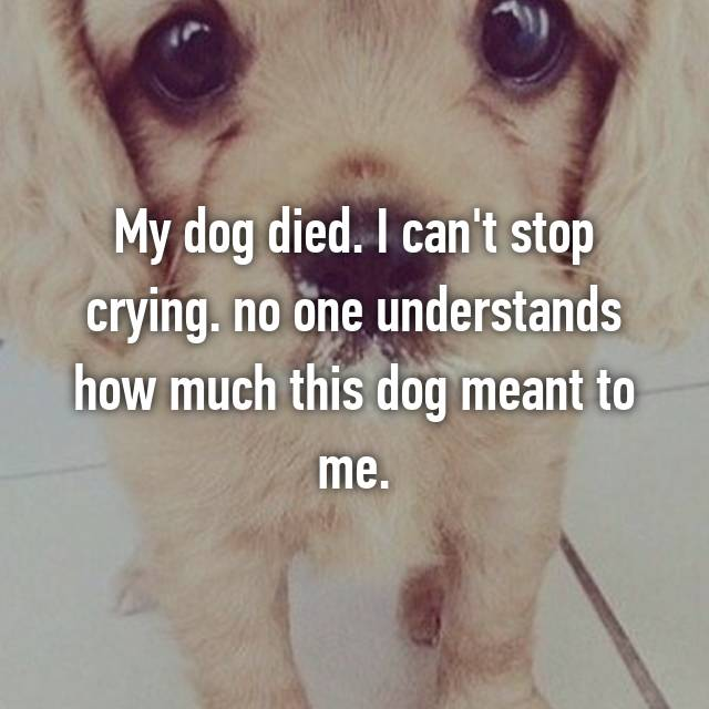My dog died. I can't stop crying. no one understands how much this dog meant to me.