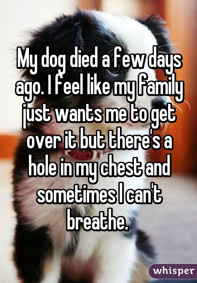 My dog died a few days ago. I feel like my family just wants me to get over it but there