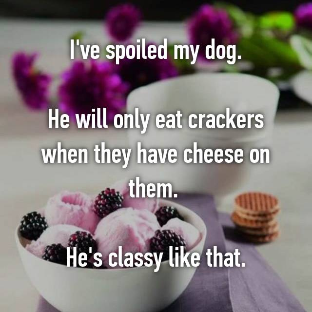 I've spoiled my dog.  He will only eat crackers when they have cheese on them.   He's classy like that.