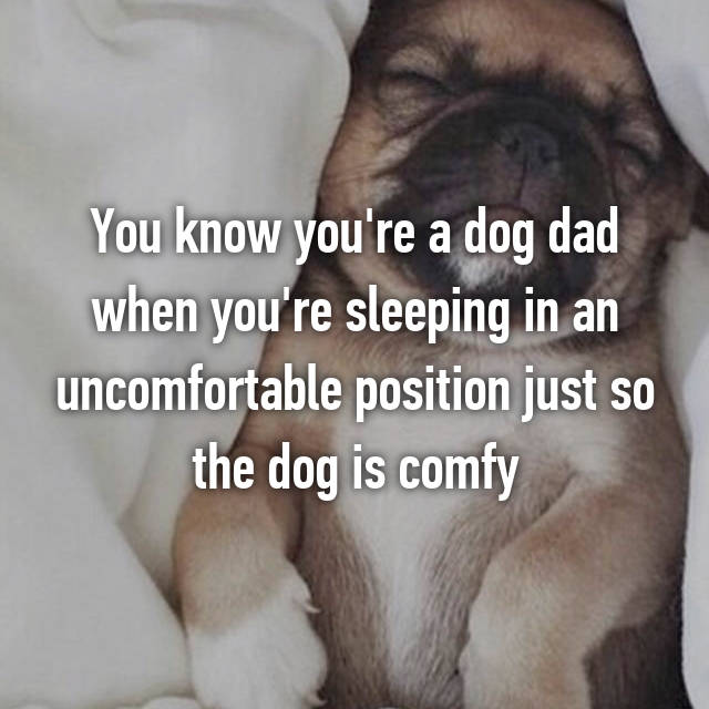 You know you're a dog dad when you're sleeping in an uncomfortable position just so the dog is comfy