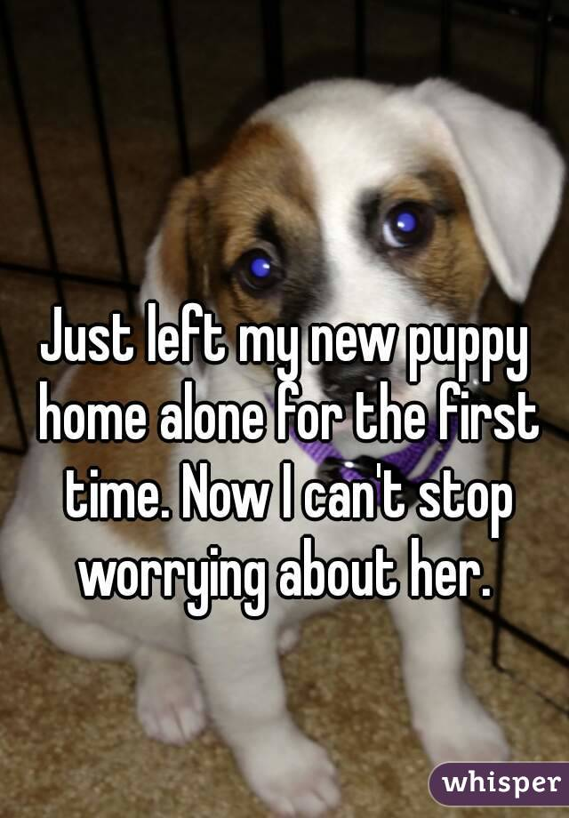 Just left my new puppy home alone for the first time. Now I can