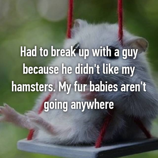 Had to break up with a guy because he didn't like my hamsters. My fur babies aren't going anywhere 😁🐹