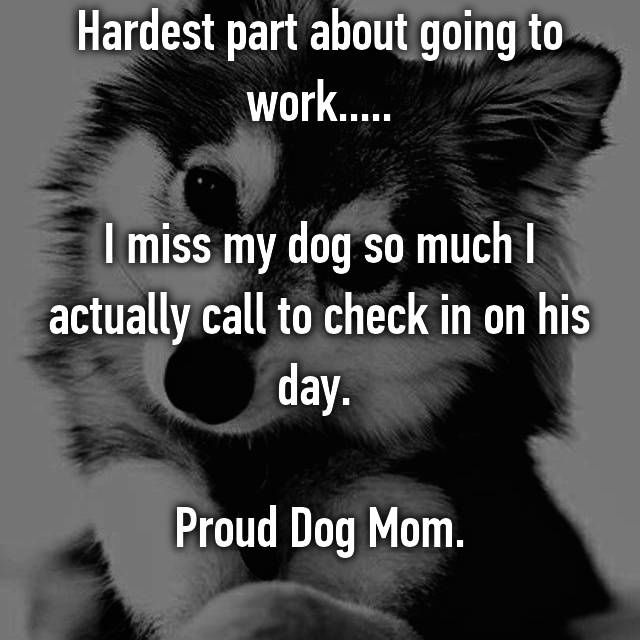 Hardest part about going to work.....  I miss my dog so much I actually call to check in on his day.   Proud Dog Mom.
