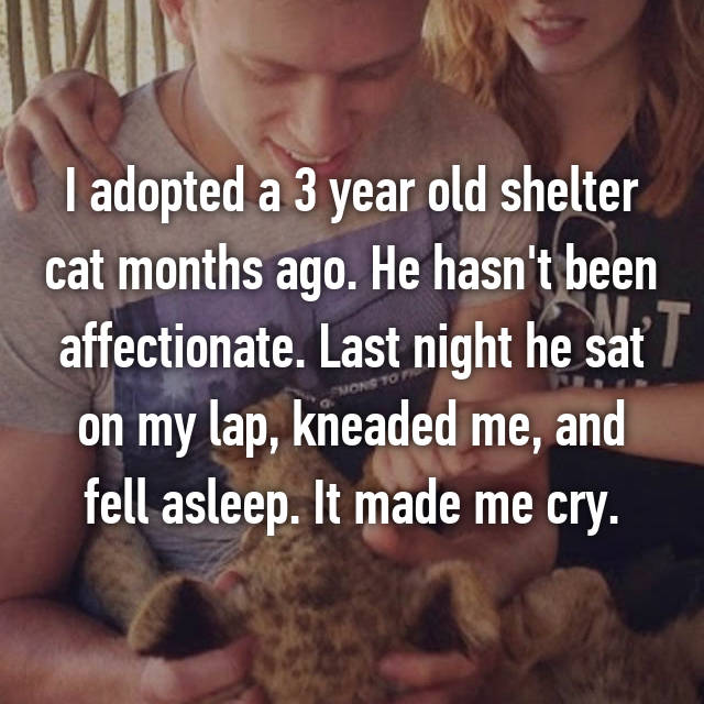 I adopted a 3 year old shelter cat months ago. He hasn't been affectionate. Last night he sat on my lap, kneaded me, and fell asleep. It made me cry.