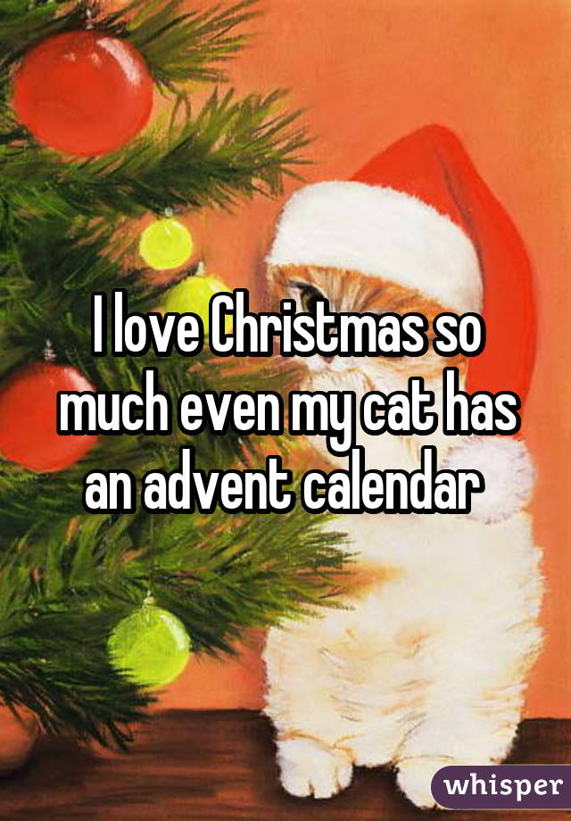 I love Christmas so much even my cat has an advent calendar