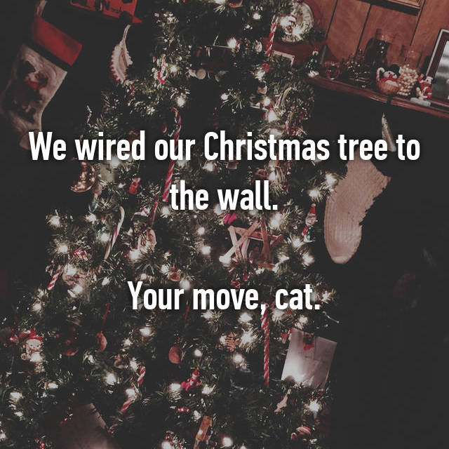 We wired our Christmas tree to the wall.  Your move, cat.