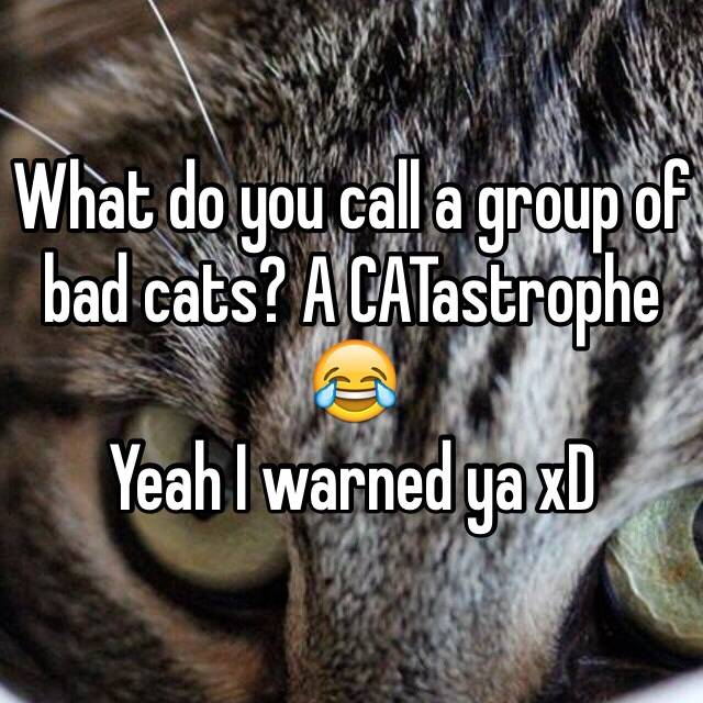 What do you call a group of cats?