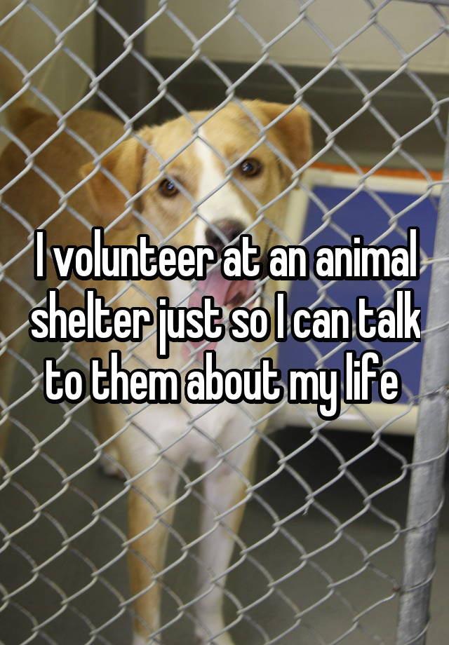 I volunteer at an animal shelter just so I can talk to them about my life