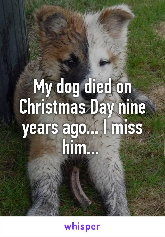 the day my pet died When my dog lucky died, i disappeared too  whose sudden passing revealed a phenomenon that happens when your pet dies: you feel invisible  even though it had nothing to do with my day job.