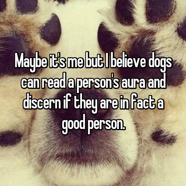 Maybe it's me but I believe dogs can read a person's aura and discern if they are in fact a good person.