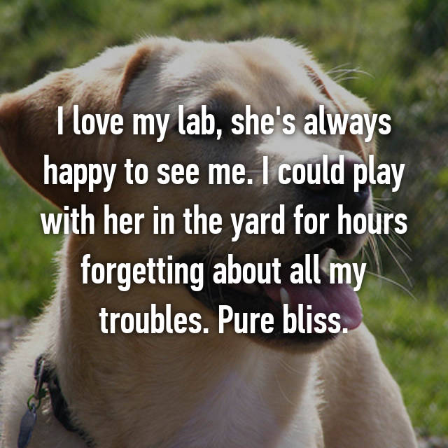 I love my lab, she's always happy to see me. I could play with her in the yard for hours forgetting about all my troubles. Pure bliss.