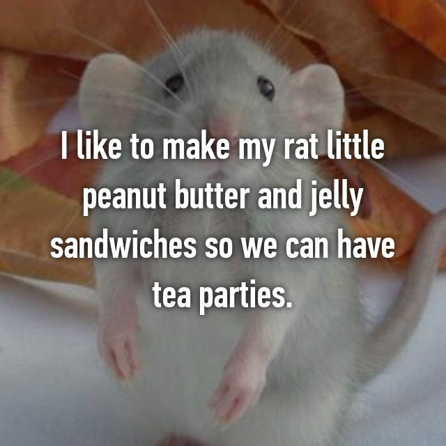 I like to make my rat little peanut butter and jelly sandwiches so we can have tea parties.