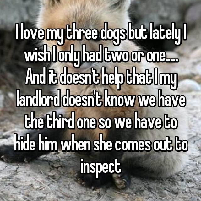 I love my three dogs but lately I wish I only had two or one..... And it doesn't help that I my landlord doesn't know we have the third one so we have to hide him when she comes out to inspect