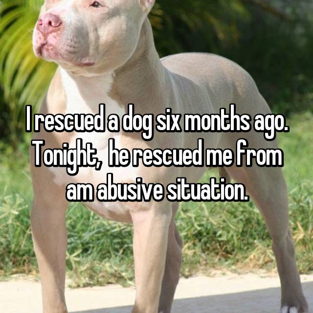 I rescued a dog six months ago. Tonight,  he rescued me from am abusive situation.