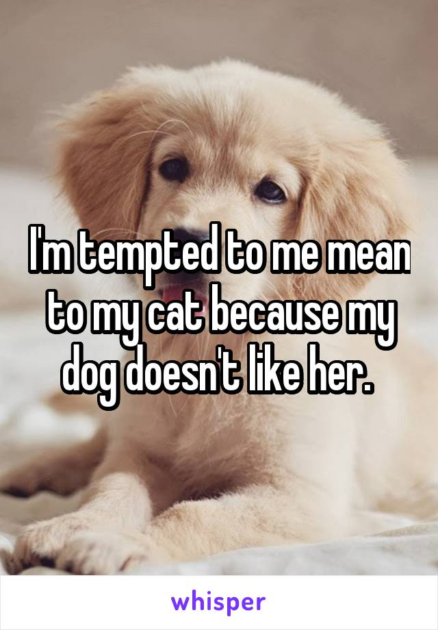 I'm tempted to me mean to my cat because my dog doesn't like her.