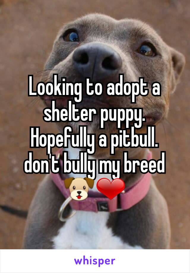 Looking to adopt a shelter puppy. Hopefully a pitbull. don't bully my breed 🐶❤