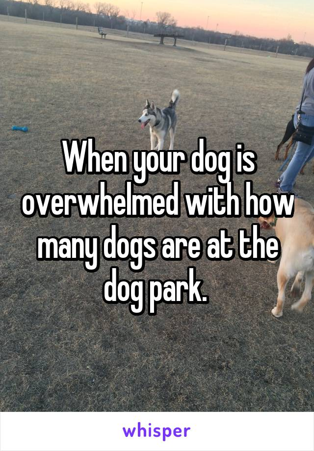 When your dog is overwhelmed with how many dogs are at the dog park.