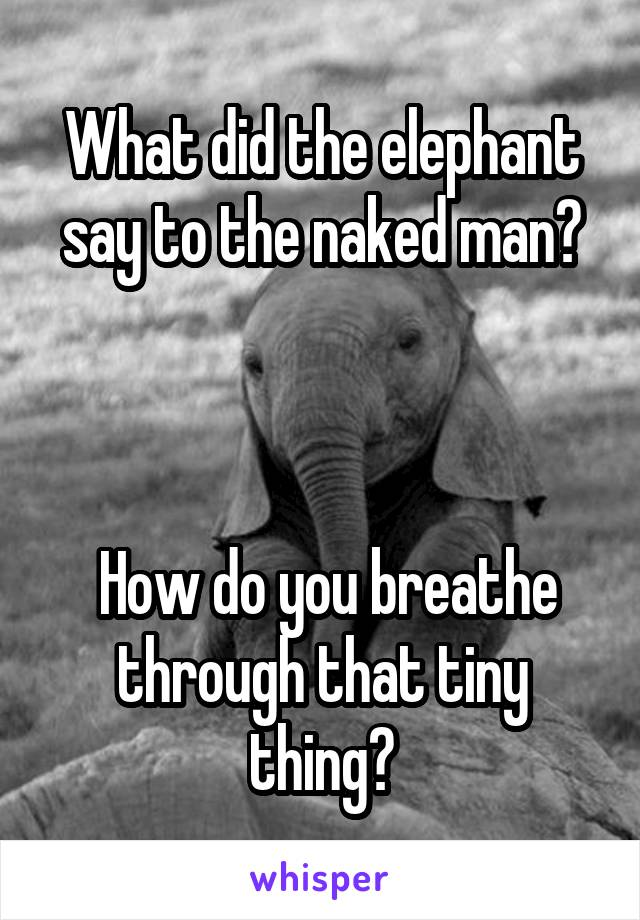 What did the elephant say to the naked man?     How do you breathe through that tiny thing?