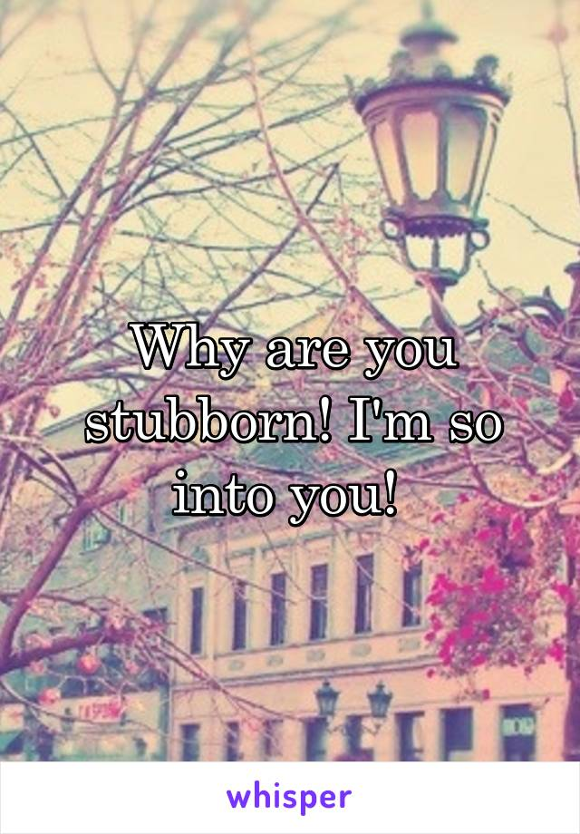 Why are you stubborn! I'm so into you!