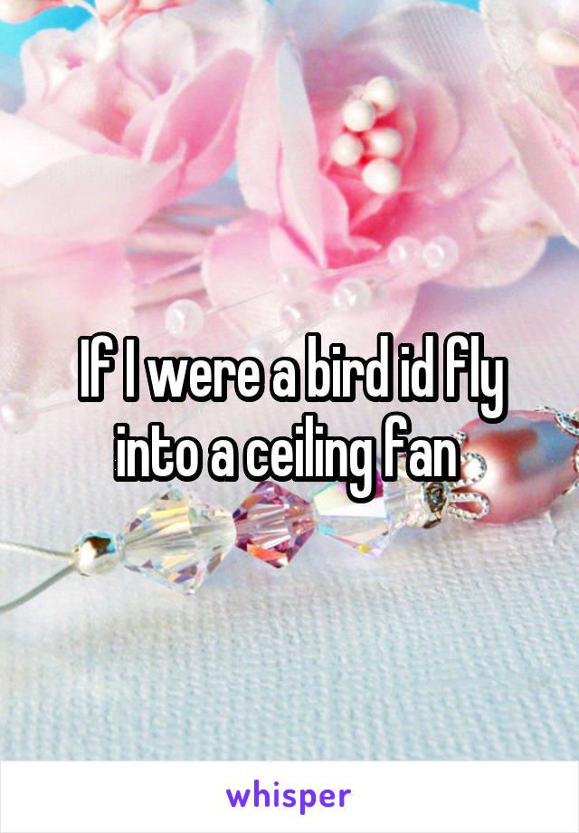 If I were a bird id fly into a ceiling fan