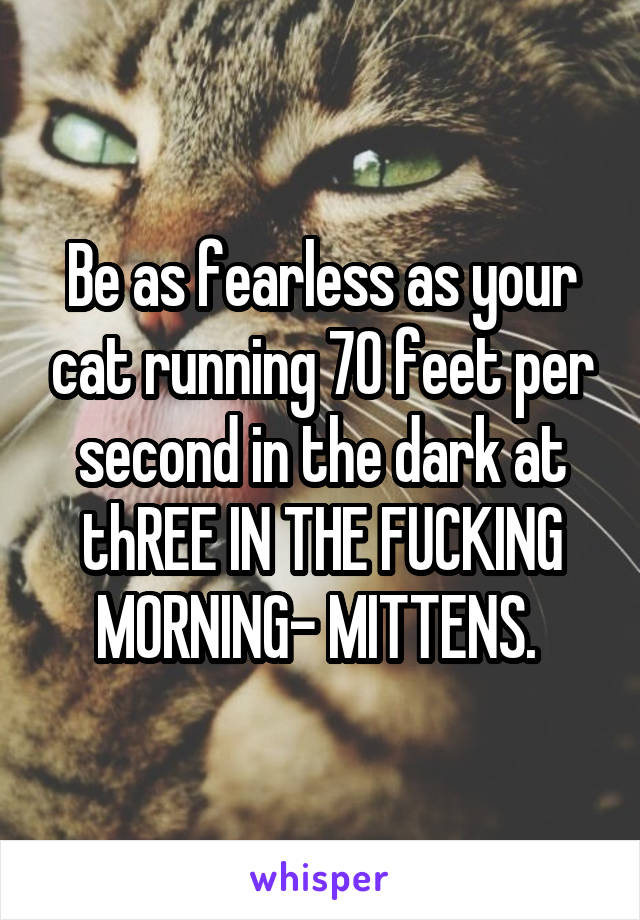 Be as fearless as your cat running 70 feet per second in the dark at thREE IN THE FUCKING MORNING- MITTENS.