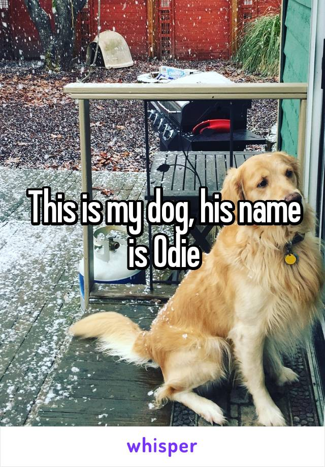 This is my dog, his name is Odie