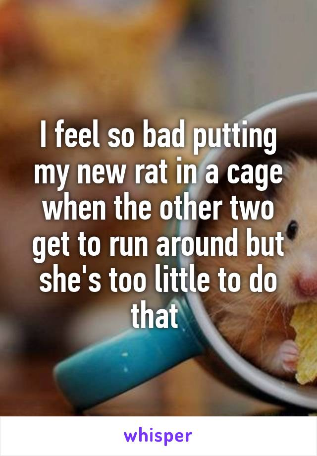 I feel so bad putting my new rat in a cage when the other two get to run around but she's too little to do that
