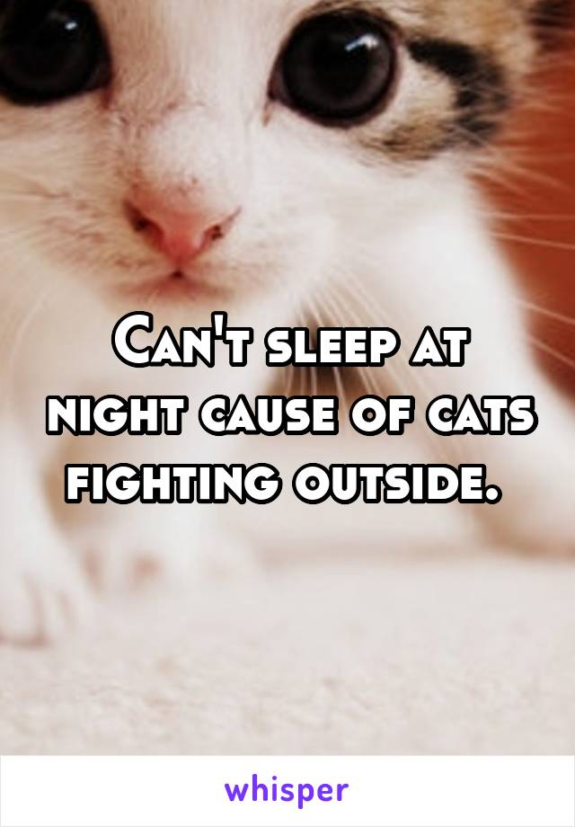 Can't sleep at night cause of cats fighting outside.